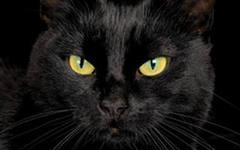 chernij kot