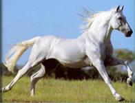 конь по имени Кеша