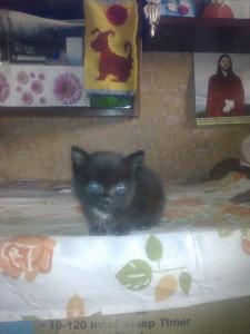 Черныш - приемный котенок